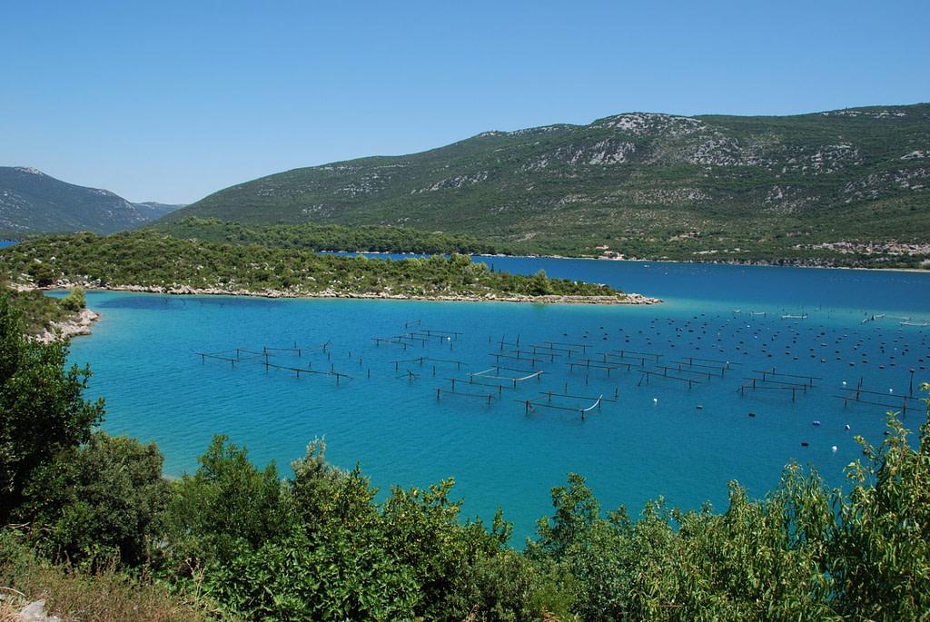 Oyster Havesting - Ston - Mali Ston - Croatia - Adventures Croatia